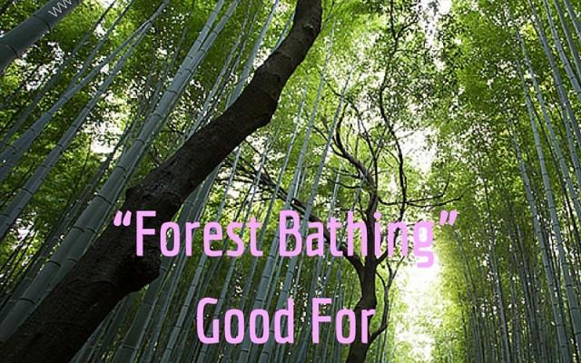 """Forest Bathing"" Good For Weak Immune Systems!"