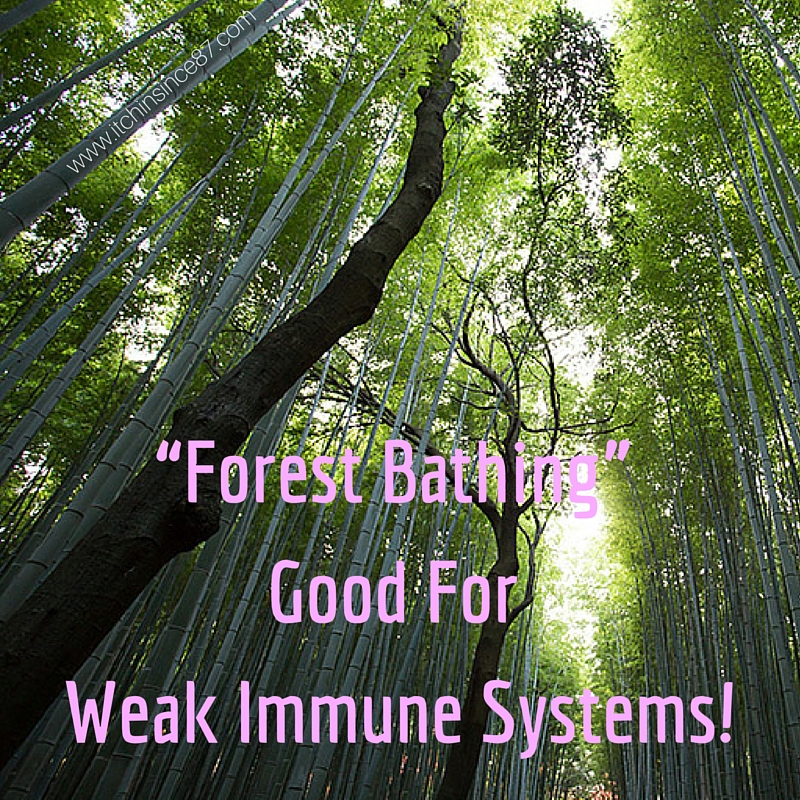 """Forest Bathing"" Good For Weak Immune Systems!"